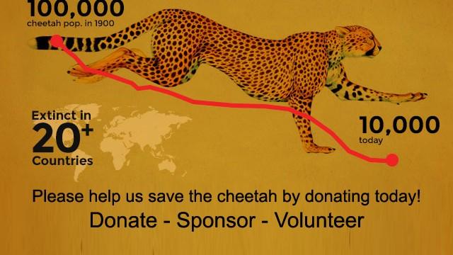 CCF Cheetah Declining