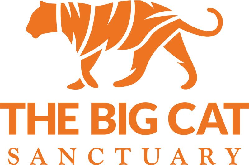Cheetah Conversations At The Big Cat Sanctuary