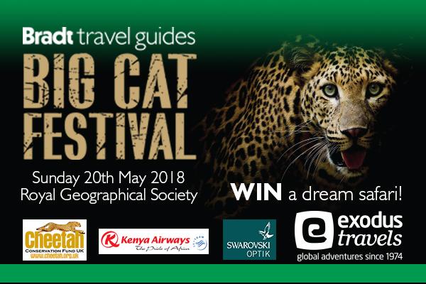 Big Cat Festival 2018