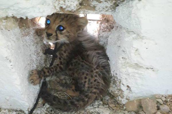 CCF Illegal Pet Trade Somaliland