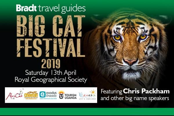Big Cat Festival 2019
