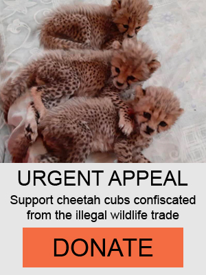 Donate Illegal Wildlife Trade