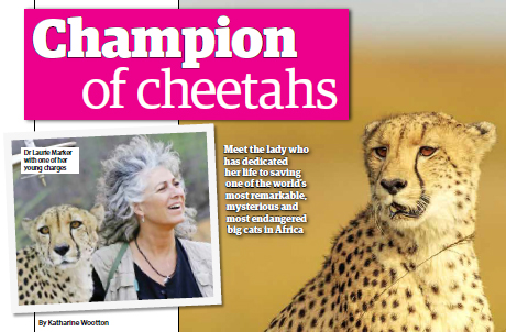 Yours Magazine Cheetah