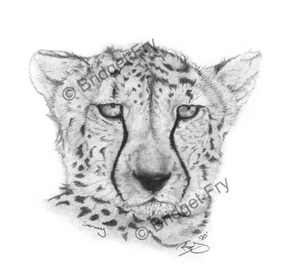 Seney Cheetah