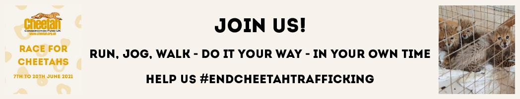 Race for Cheetahs